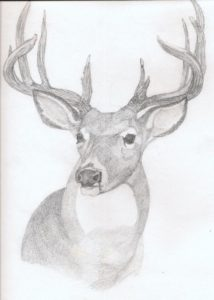 ciervo para pintar