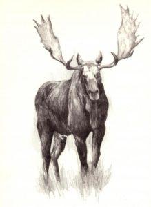 ciervos alces