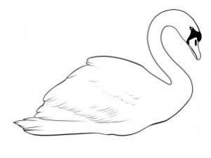 cisne para colorear