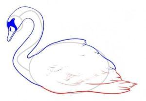 cisne para pintar