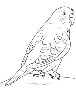 como dibujar loros