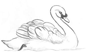 como dibujar un cisne facil