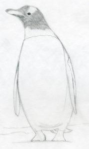 como dibujar un pingüino