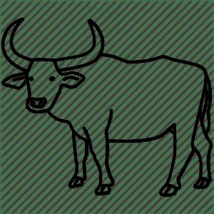 como un bufalo
