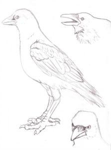 cuervo animado