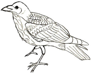 cuervo dibujo animado