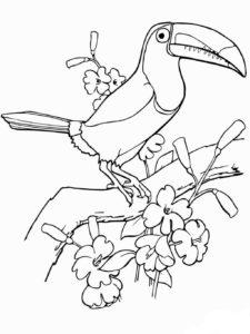 dibujo de tucan para colorear