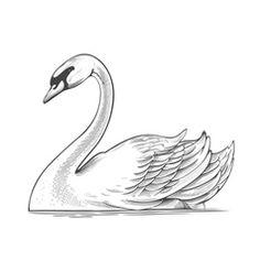 dibujos de cisnes faciles