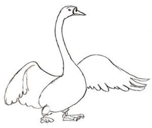 dibujos de cisnes para boda