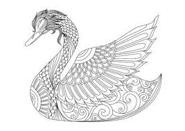 dibujos de cisnes pintados