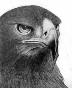 figuras de halcones
