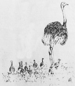 foto avestruz