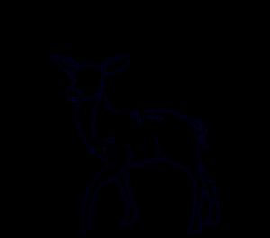 foto ciervo