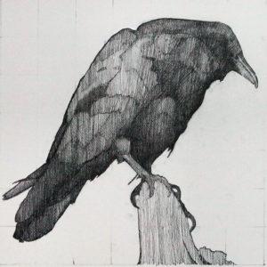 fotos cuervos gratis