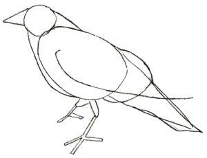 fotos del cuervo