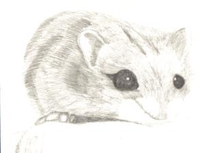 hamster imagenes