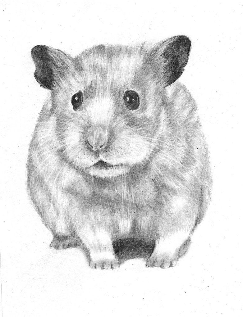 hamster para pintar