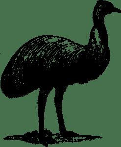imágenes de huevos de avestruz