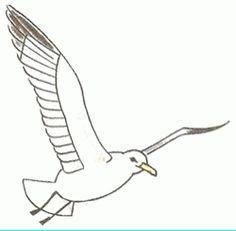 imagen de una gaviota