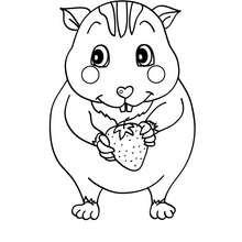 imagen hamster