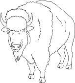 imagenes de bufalos americanos