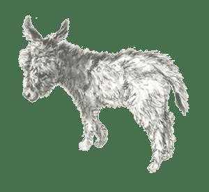imagenes de burros