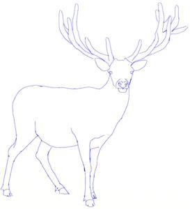 imagenes de ciervos para colorear