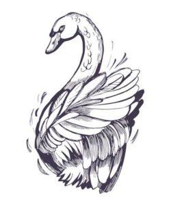 imagenes de cisnes enamorados