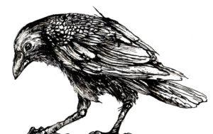 imagenes de cuervos goticos