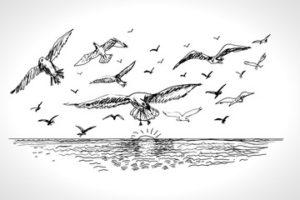 imagenes de gaviotas para dibujar
