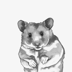 imagenes de hamster animados