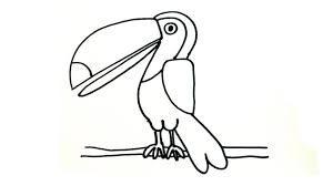 imagenes de tucanes pintados