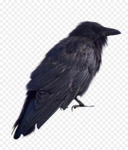 imagenes del cuervo para descargar