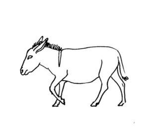 imajenes de burros