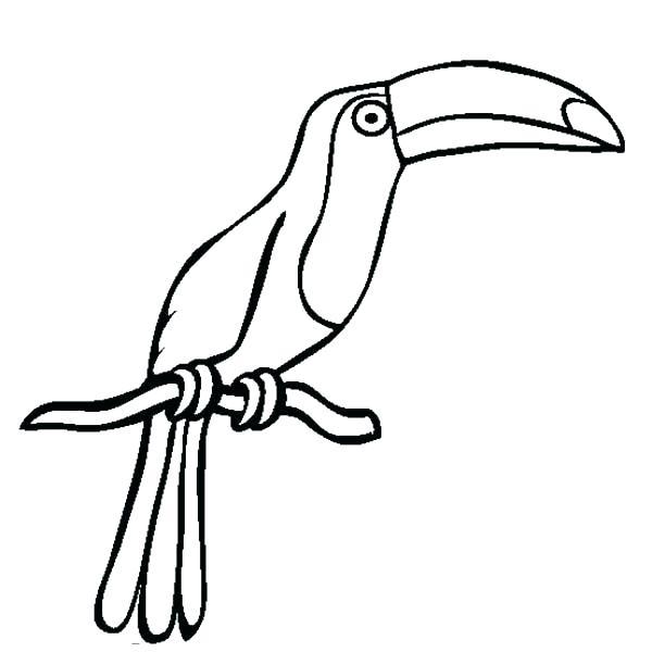 ᐈ Dibujos De Tucanesguiapinta El Pico De Un Tucan