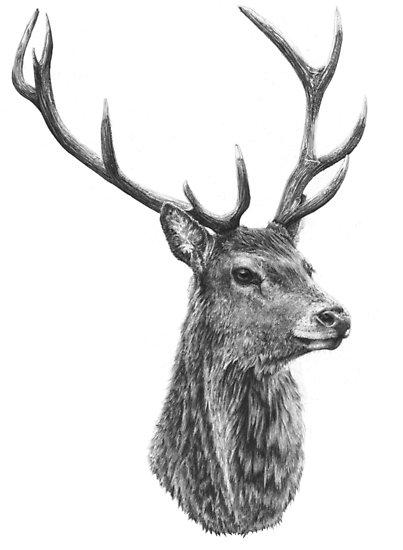 Dibujos De Venados Tutorial Fácil Venado Para Pintar