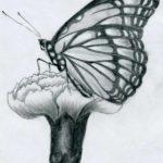 dibujos para principiantes a lapiz