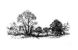arbustos animados