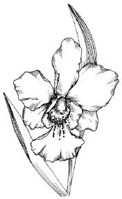 clases de orquideas fotos
