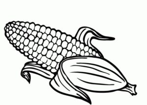 como dibujar una planta de maiz