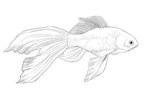 como se dibuja un pescado