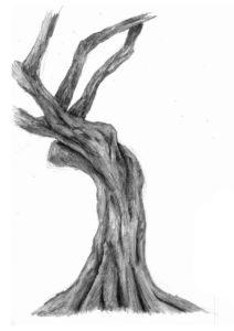 dibujo rama olivo
