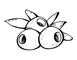 dibujos de aceitunas