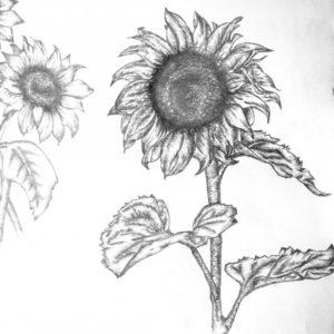 dibujos de girasoles para colorear