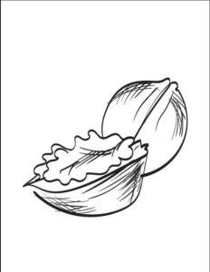 dibujos de nueces para imprimir