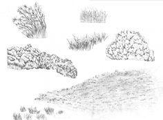 fotos de arboles arbustos y hierbas