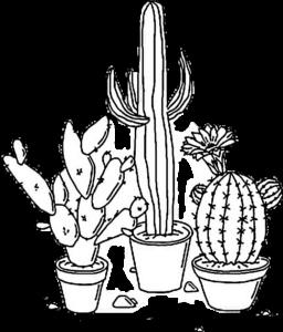 fotos de cactus