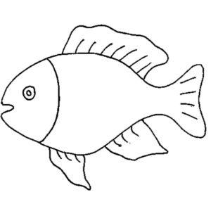 fotos de pescados