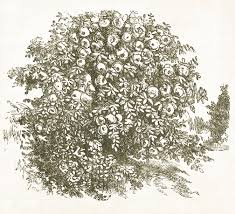 imagenes de arbustos arboles y hierbas