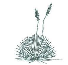 imagenes de arbustos hierbas y arboles